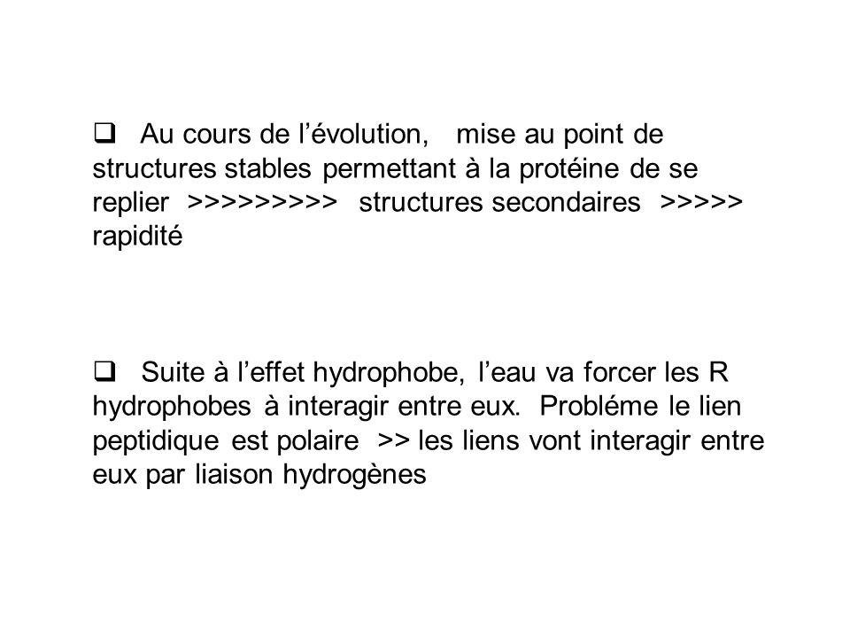  Au cours de l'évolution, mise au point de structures stables permettant à la protéine de se replier >>>>>>>>> structures secondaires >>>>> rapidité  Suite à l'effet hydrophobe, l'eau va forcer les R hydrophobes à interagir entre eux.