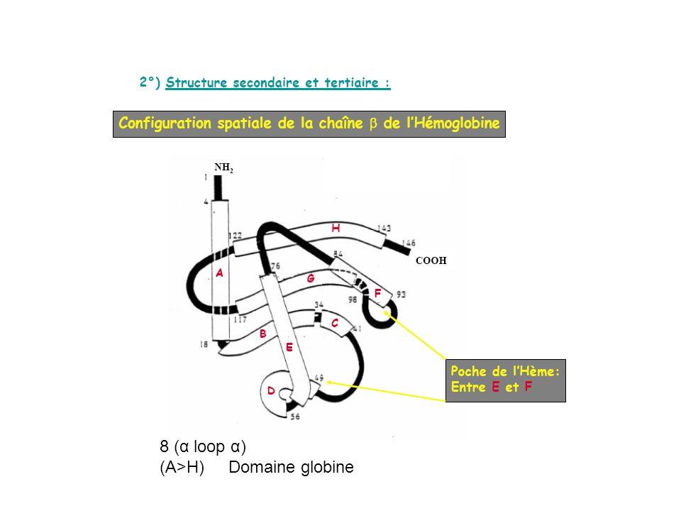 8 (α loop α) (A>H) Domaine globine