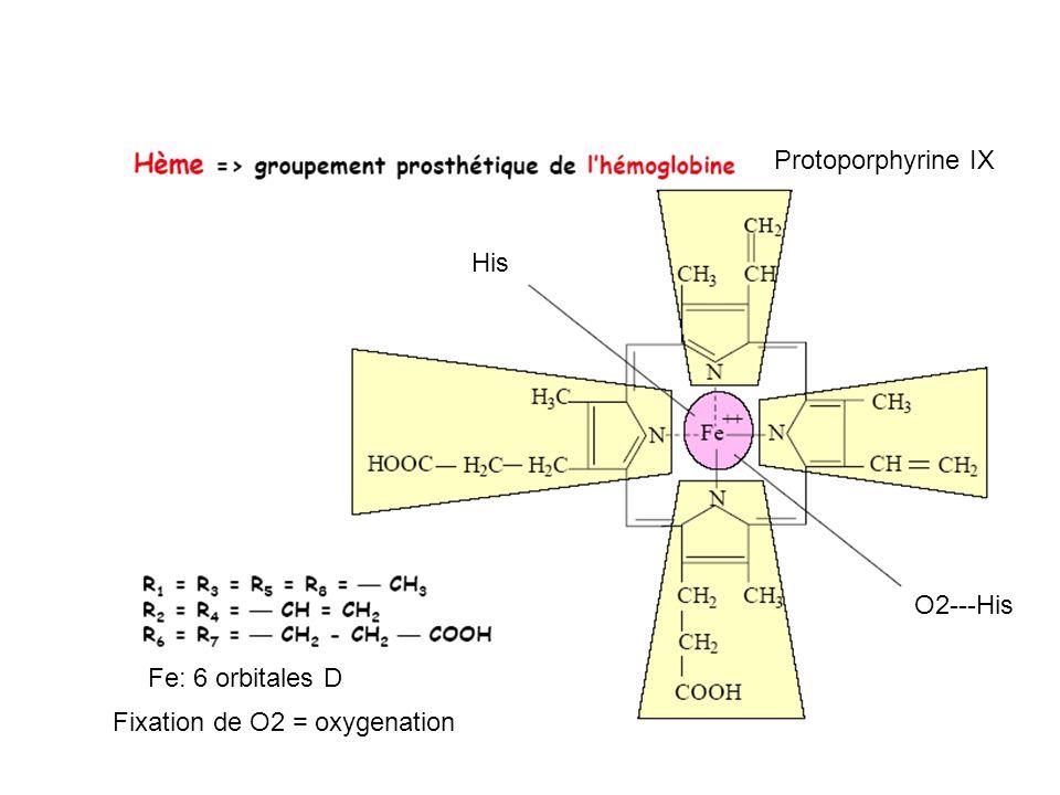 Protoporphyrine IX Fe: 6 orbitales D His O2---His Fixation de O2 = oxygenation
