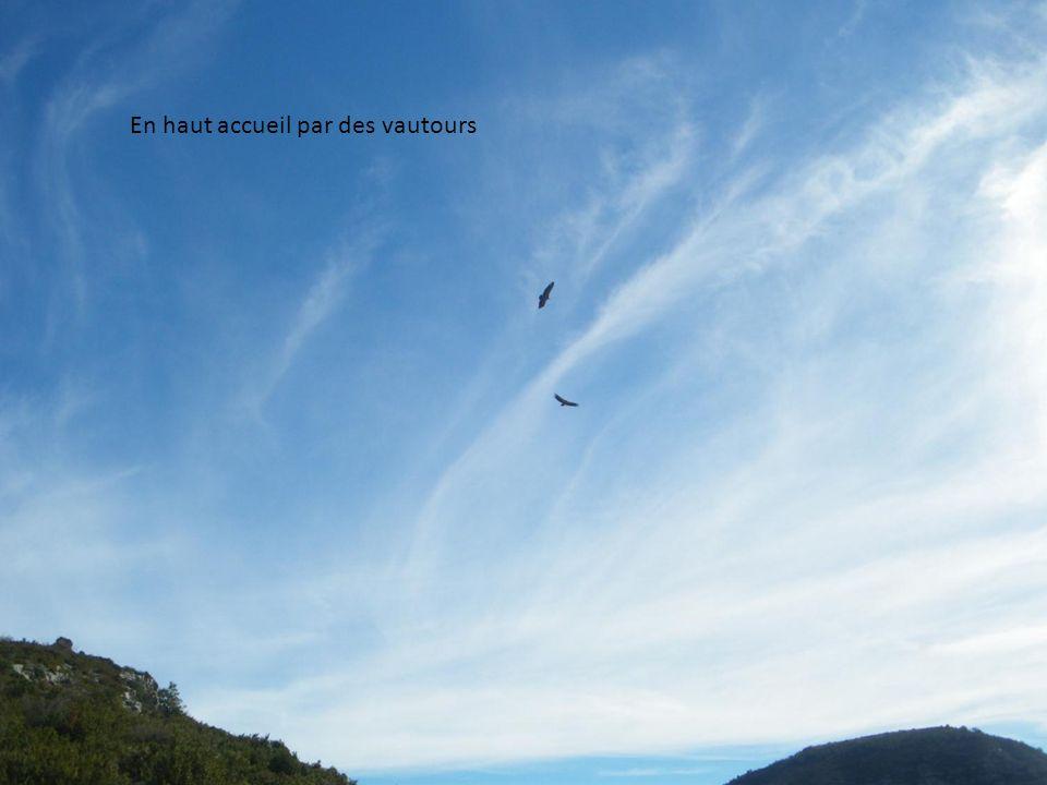 En haut accueil par des vautours