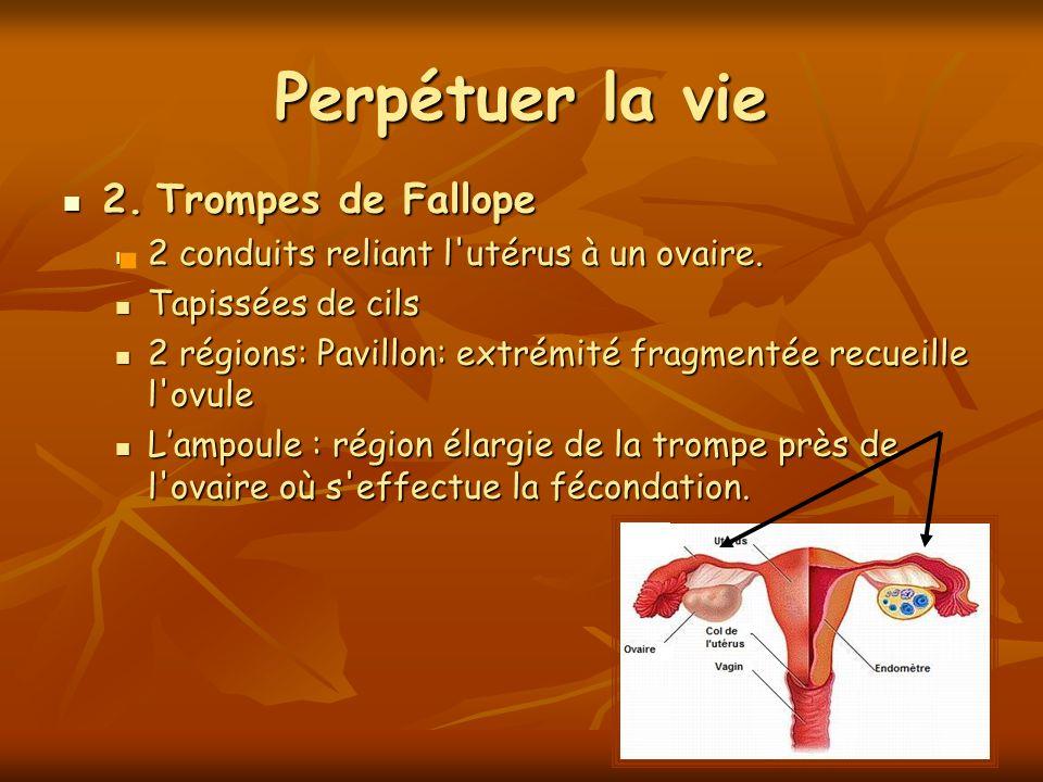 Perpétuer la vie 2. Trompes de Fallope 2. Trompes de Fallope 2 conduits reliant l'utérus à un ovaire. 2 conduits reliant l'utérus à un ovaire. Tapissé