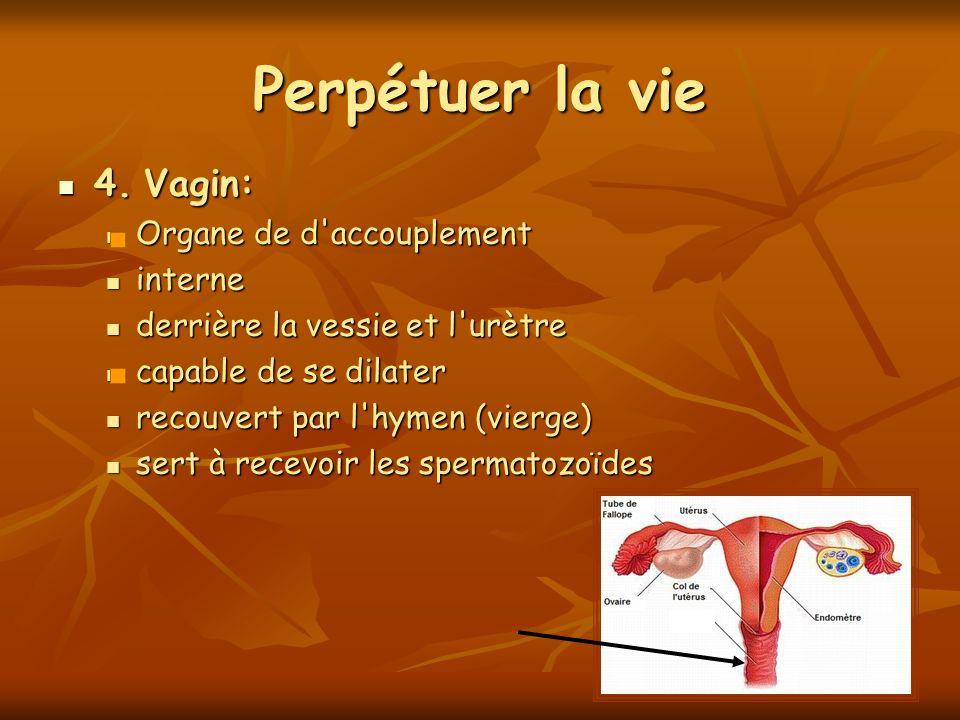 Perpétuer la vie 4. Vagin: 4. Vagin: Organe de d'accouplement Organe de d'accouplement interne interne derrière la vessie et l'urètre derrière la vess