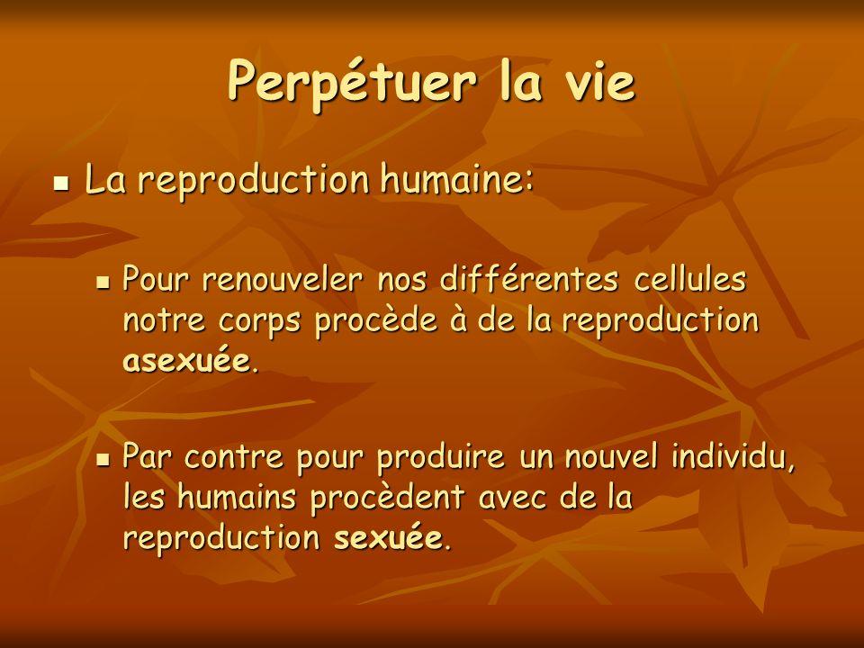 Perpétuer la vie La reproduction humaine: La reproduction humaine: Pour renouveler nos différentes cellules notre corps procède à de la reproduction a