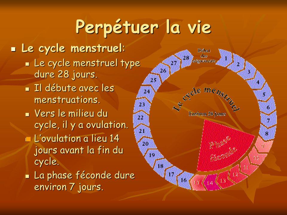 Perpétuer la vie Le cycle menstruel: Le cycle menstruel: Le cycle menstruel type dure 28 jours. Le cycle menstruel type dure 28 jours. Il débute avec