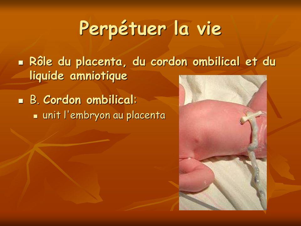Perpétuer la vie Rôle du placenta, du cordon ombilical et du liquide amniotique Rôle du placenta, du cordon ombilical et du liquide amniotique B. Cord