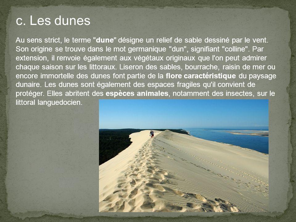 c. Les dunes Au sens strict, le terme dune désigne un relief de sable dessiné par le vent.