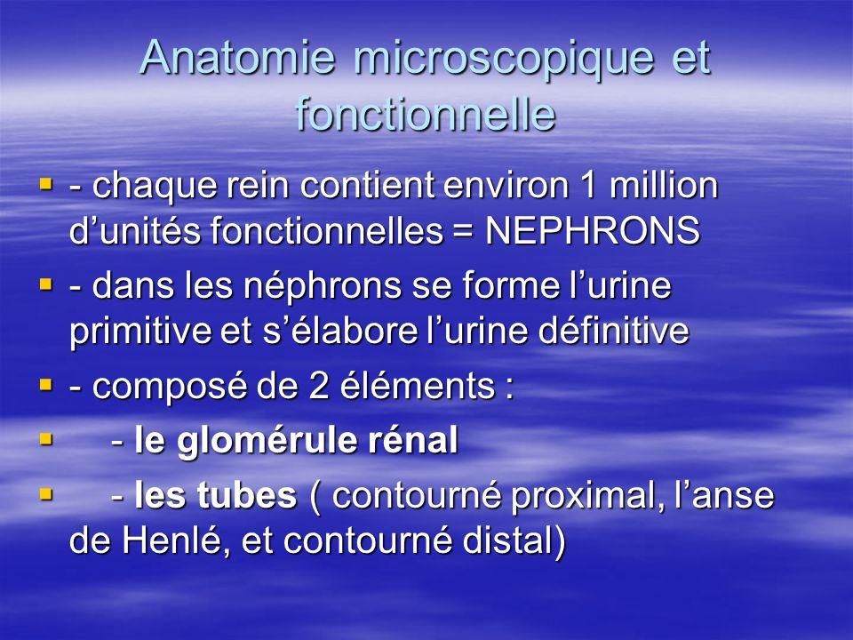 Anatomie microscopique et fonctionnelle  - chaque rein contient environ 1 million d'unités fonctionnelles = NEPHRONS  - dans les néphrons se forme l'urine primitive et s'élabore l'urine définitive  - composé de 2 éléments :  - le glomérule rénal  - les tubes ( contourné proximal, l'anse de Henlé, et contourné distal)