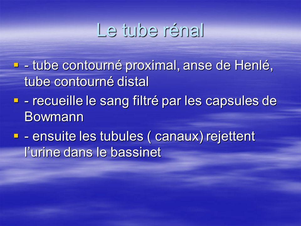 Le tube rénal  - tube contourné proximal, anse de Henlé, tube contourné distal  - recueille le sang filtré par les capsules de Bowmann  - ensuite les tubules ( canaux) rejettent l'urine dans le bassinet