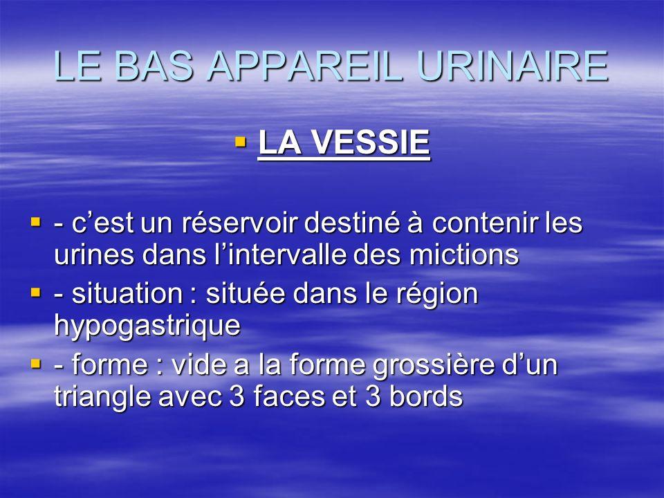 LE BAS APPAREIL URINAIRE  LA VESSIE  - c'est un réservoir destiné à contenir les urines dans l'intervalle des mictions  - situation : située dans le région hypogastrique  - forme : vide a la forme grossière d'un triangle avec 3 faces et 3 bords
