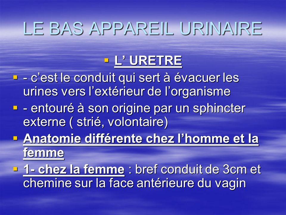 LE BAS APPAREIL URINAIRE  L' URETRE  - c'est le conduit qui sert à évacuer les urines vers l'extérieur de l'organisme  - entouré à son origine par un sphincter externe ( strié, volontaire)  Anatomie différente chez l'homme et la femme  1- chez la femme : bref conduit de 3cm et chemine sur la face antérieure du vagin