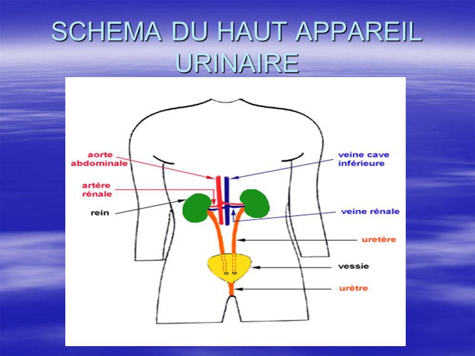 Les urètres chez l'homme  - constitué d'un épithélium transitionnel  - musculature lisse et striée  - la musculature lisse autour de l'urètre s'oppose à l'éjaculation préçoce = commande involontaire  - la musculature striée réalise le sphincter urétral externe = commande volontaire