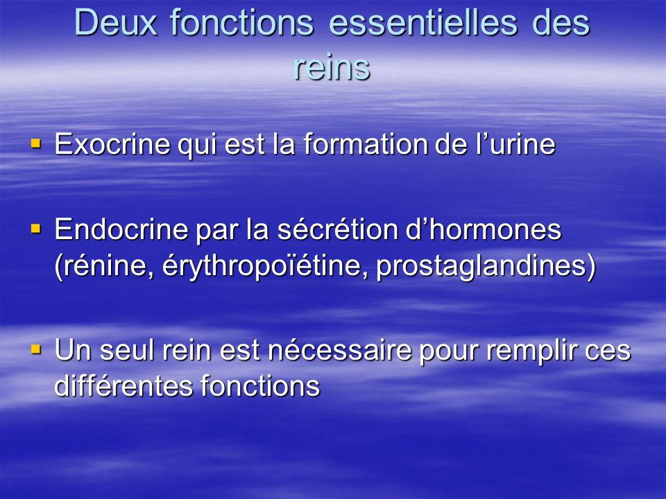 Deux fonctions essentielles des reins  Exocrine qui est la formation de l'urine  Endocrine par la sécrétion d'hormones (rénine, érythropoïétine, prostaglandines)  Un seul rein est nécessaire pour remplir ces différentes fonctions