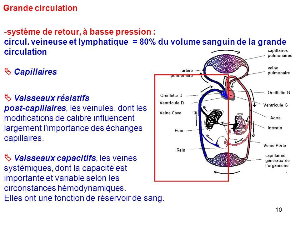 10 capillaires pulmonaires veine pulmonaire Oreillette G Ventricule G Aorte artère pulmonaire Oreillette D Ventricule D Veine Cave Veine Porte capillaires généraux de l'organisme Intestin Foie Rein Grande circulation -système de retour, à basse pression : circul.