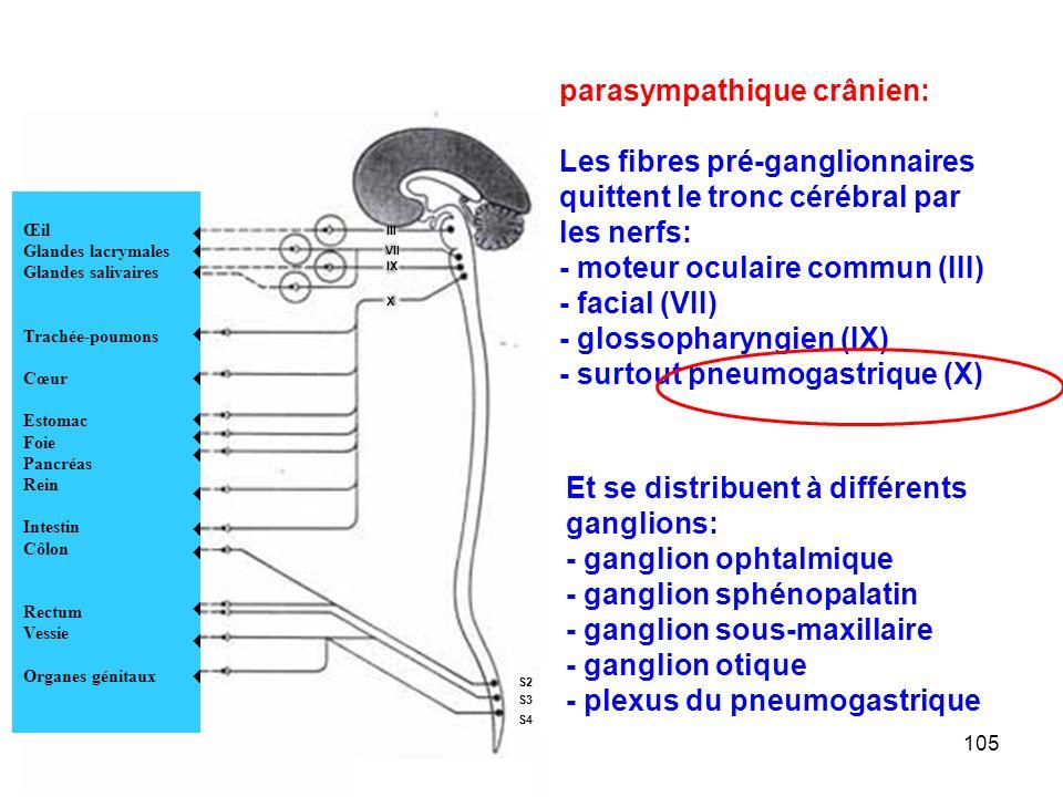 105 Œil Glandes lacrymales Glandes salivaires Trachée-poumons Cœur Estomac Foie Pancréas Rein Intestin Côlon Rectum Vessie Organes génitaux               III VII IX X S2 S3 S4 parasympathique crânien: Les fibres pré-ganglionnaires quittent le tronc cérébral par les nerfs: - moteur oculaire commun (III) - facial (VII) - glossopharyngien (IX) - surtout pneumogastrique (X) Et se distribuent à différents ganglions: - ganglion ophtalmique - ganglion sphénopalatin - ganglion sous-maxillaire - ganglion otique - plexus du pneumogastrique