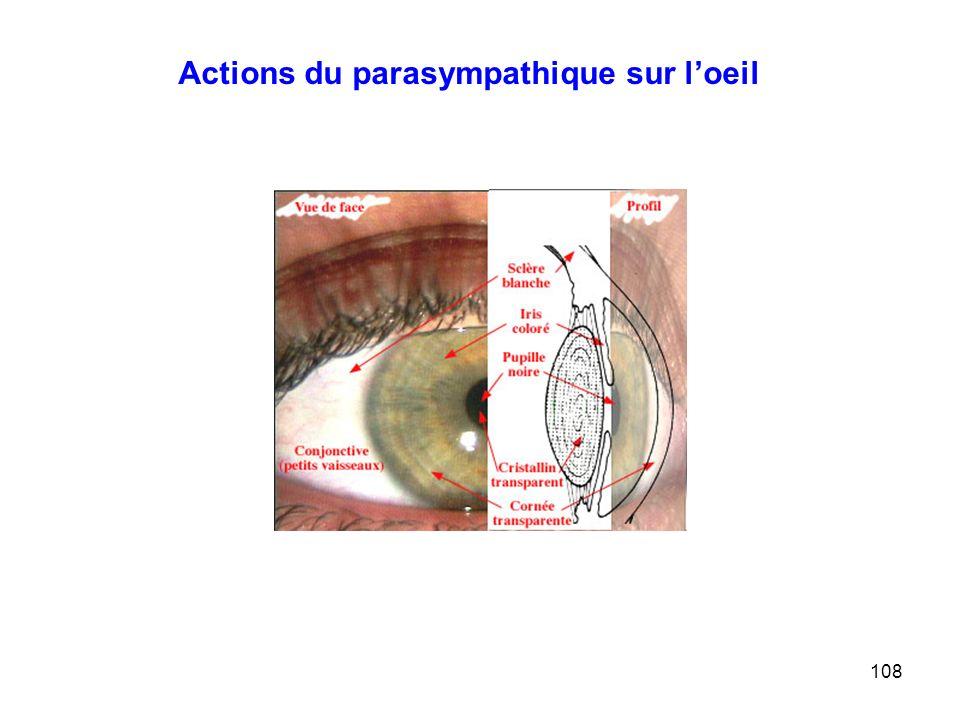 108 Actions du parasympathique sur l'oeil