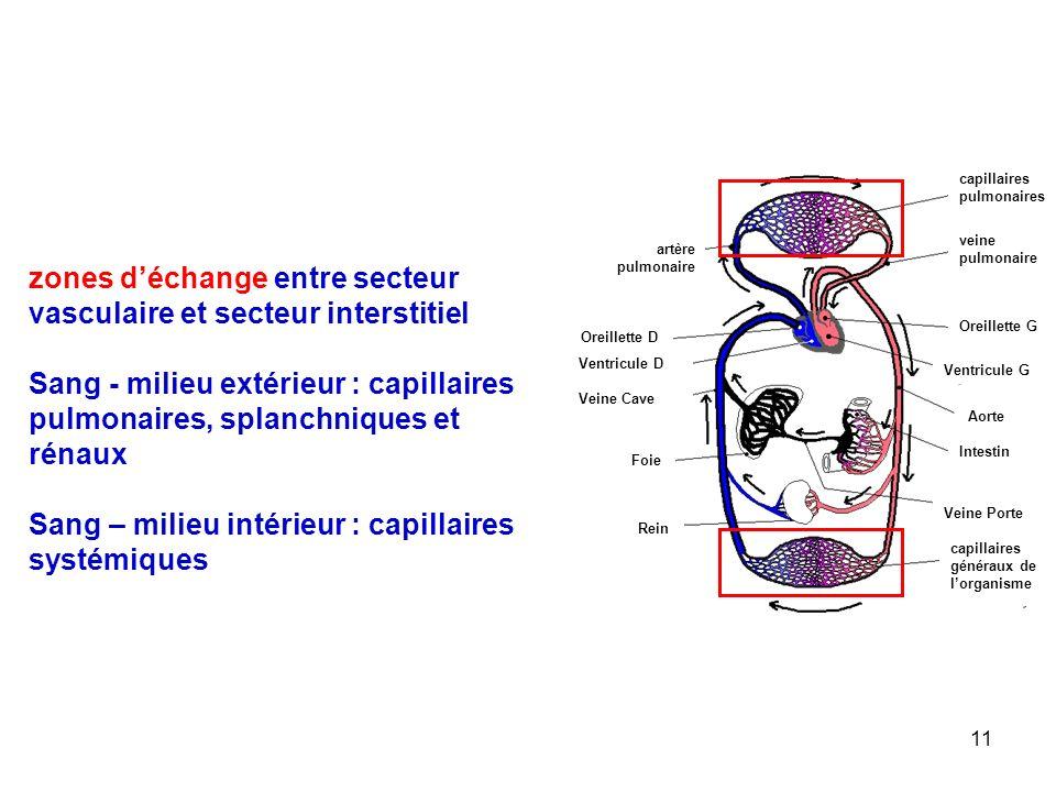 11 capillaires pulmonaires veine pulmonaire Oreillette G Ventricule G Aorte artère pulmonaire Oreillette D Ventricule D Veine Cave Veine Porte capillaires généraux de l'organisme Intestin Foie Rein zones d'échange entre secteur vasculaire et secteur interstitiel Sang - milieu extérieur : capillaires pulmonaires, splanchniques et rénaux Sang – milieu intérieur : capillaires systémiques