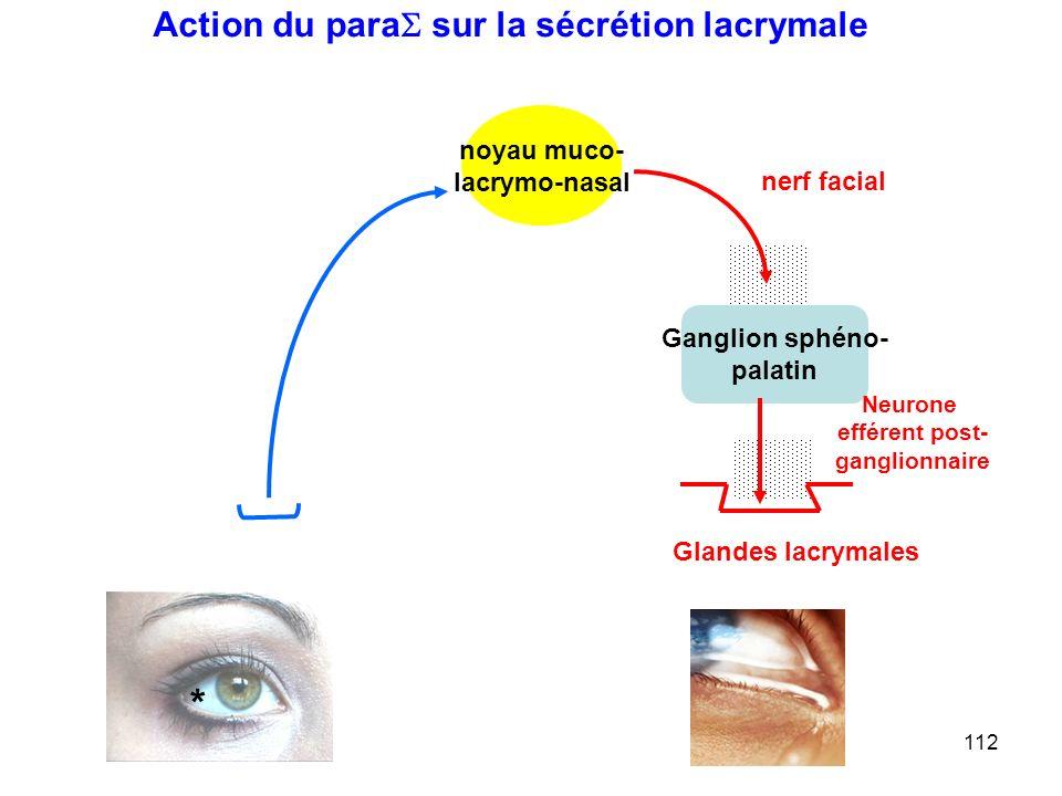 112 Ganglion sphéno- palatin nerf facial Neurone efférent post- ganglionnaire noyau muco- lacrymo-nasal Glandes lacrymales * Action du para  sur la sécrétion lacrymale