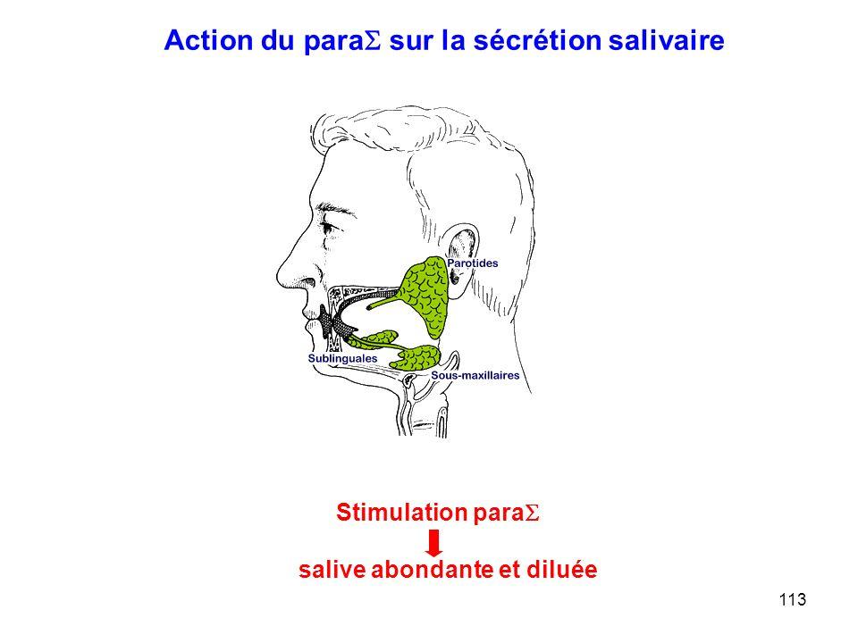 113 Action du para  sur la sécrétion salivaire Stimulation para  salive abondante et diluée