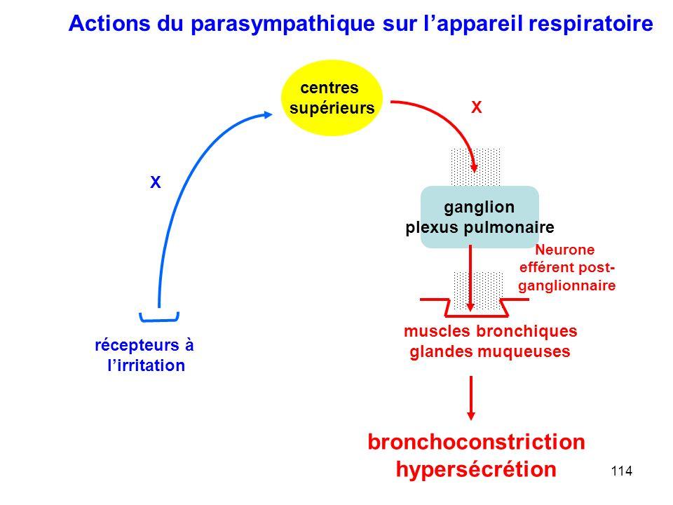 114 ganglion plexus pulmonaire X Neurone efférent post- ganglionnaire centres supérieurs muscles bronchiques glandes muqueuses X récepteurs à l'irritation bronchoconstriction hypersécrétion Actions du parasympathique sur l'appareil respiratoire