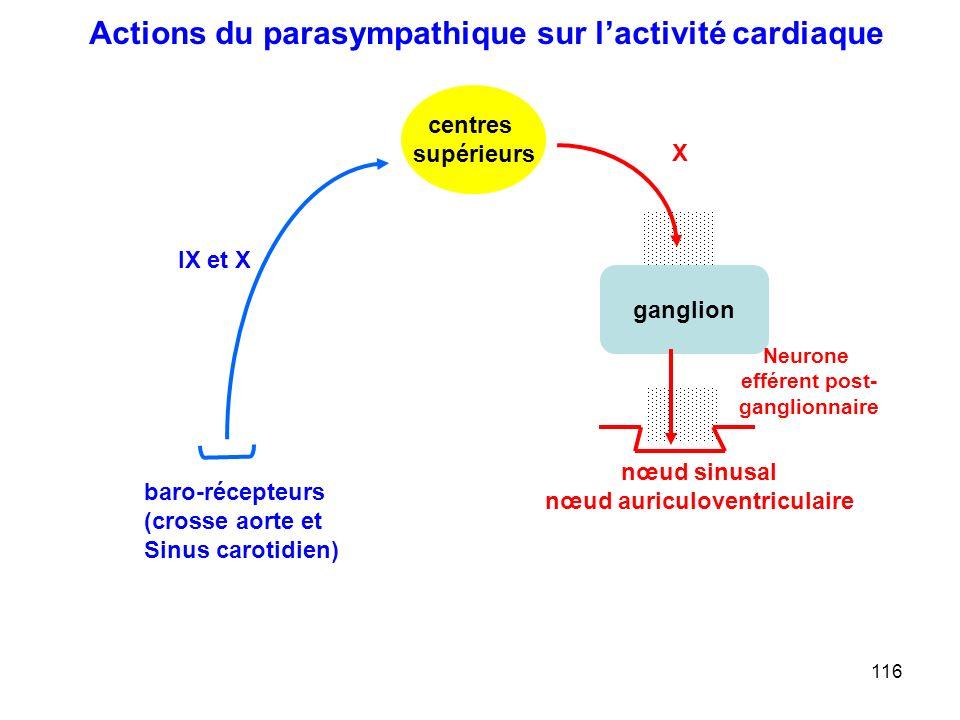 116 ganglion X Neurone efférent post- ganglionnaire centres supérieurs nœud sinusal nœud auriculoventriculaire IX et X baro-récepteurs (crosse aorte et Sinus carotidien) Actions du parasympathique sur l'activité cardiaque