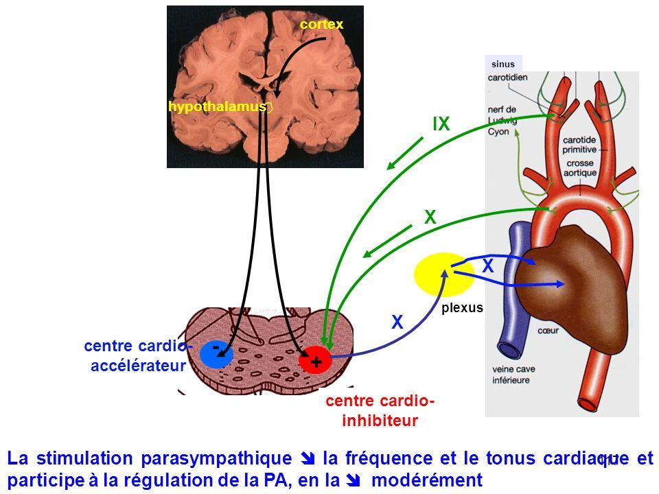 117 sinus X IX - + centre cardio- accélérateur centre cardio- inhibiteur X X plexus hypothalamus cortex La stimulation parasympathique  la fréquence et le tonus cardiaque et participe à la régulation de la PA, en la  modérément