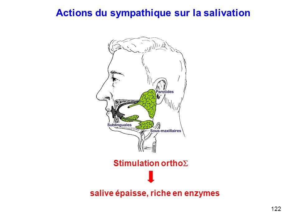122 Actions du sympathique sur la salivation Stimulation ortho  salive épaisse, riche en enzymes