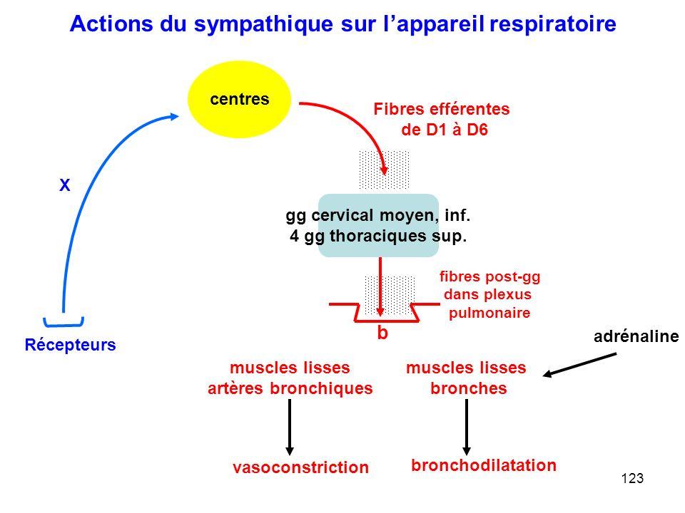 123 Fibres efférentes de D1 à D6 centres muscles lisses artères bronchiques X Récepteurs b gg cervical moyen, inf.