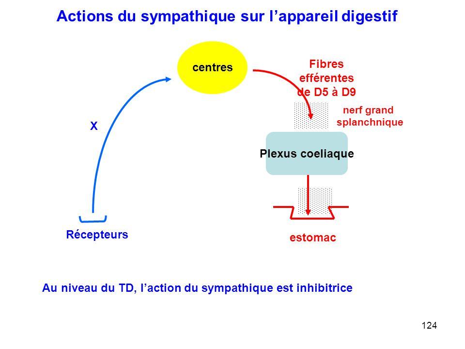 124 Fibres efférentes de D5 à D9 centres X Récepteurs Plexus coeliaque estomac nerf grand splanchnique Actions du sympathique sur l'appareil digestif Au niveau du TD, l'action du sympathique est inhibitrice