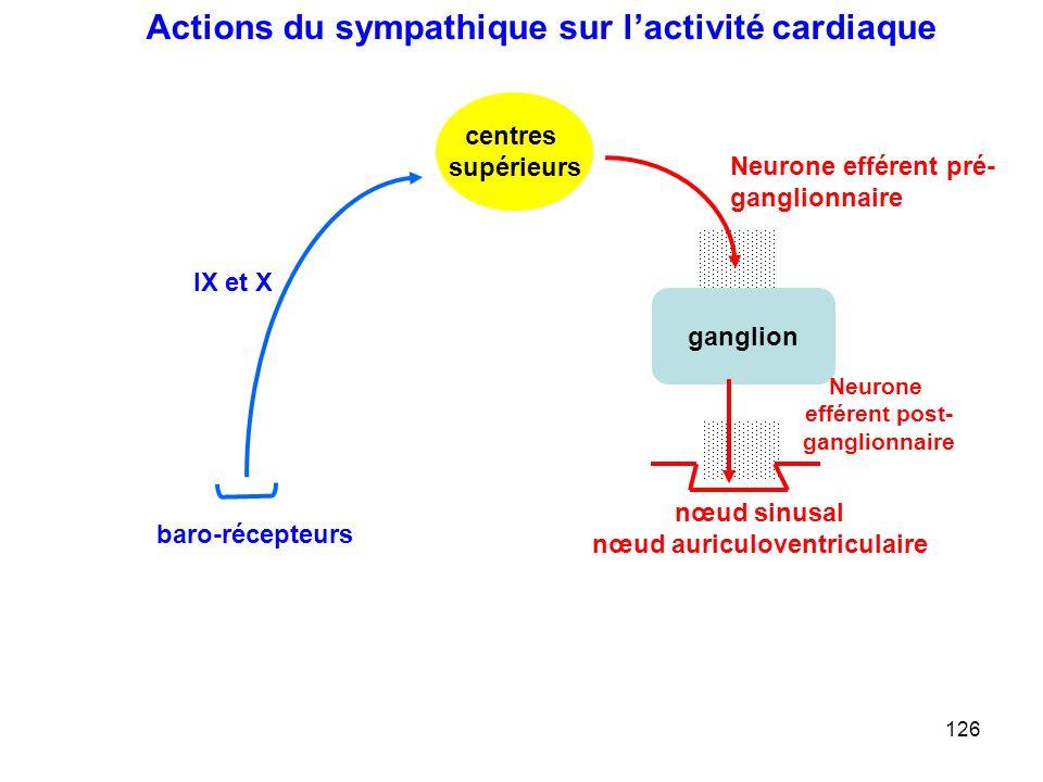 126 ganglion Neurone efférent pré- ganglionnaire Neurone efférent post- ganglionnaire centres supérieurs nœud sinusal nœud auriculoventriculaire IX et X baro-récepteurs Actions du sympathique sur l'activité cardiaque