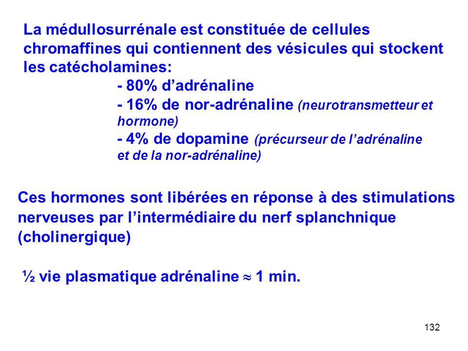 132 La médullosurrénale est constituée de cellules chromaffines qui contiennent des vésicules qui stockent les catécholamines: - 80% d'adrénaline - 16% de nor-adrénaline (neurotransmetteur et hormone) - 4% de dopamine (précurseur de l'adrénaline et de la nor-adrénaline) Ces hormones sont libérées en réponse à des stimulations nerveuses par l'intermédiaire du nerf splanchnique (cholinergique) ½ vie plasmatique adrénaline  1 min.