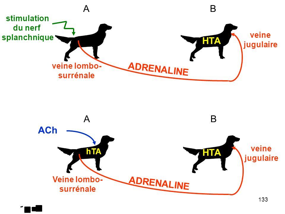 133 veine lombo- surrénale veine jugulaire AB AB Veine lombo- surrénale veine jugulaire stimulation du nerf splanchnique ADRENALINE HTA ACh hTA