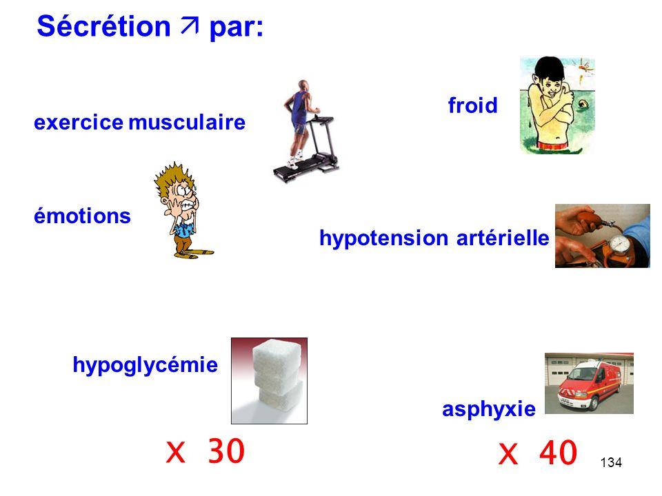 134 exercice musculaire Sécrétion  par: émotions froid hypotension artérielle asphyxie hypoglycémie X 30 X 40