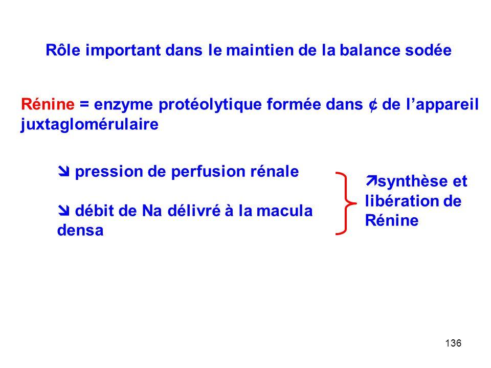 136 Rôle important dans le maintien de la balance sodée Rénine = enzyme protéolytique formée dans ¢ de l'appareil juxtaglomérulaire  pression de perfusion rénale  débit de Na délivré à la macula densa  synthèse et libération de Rénine