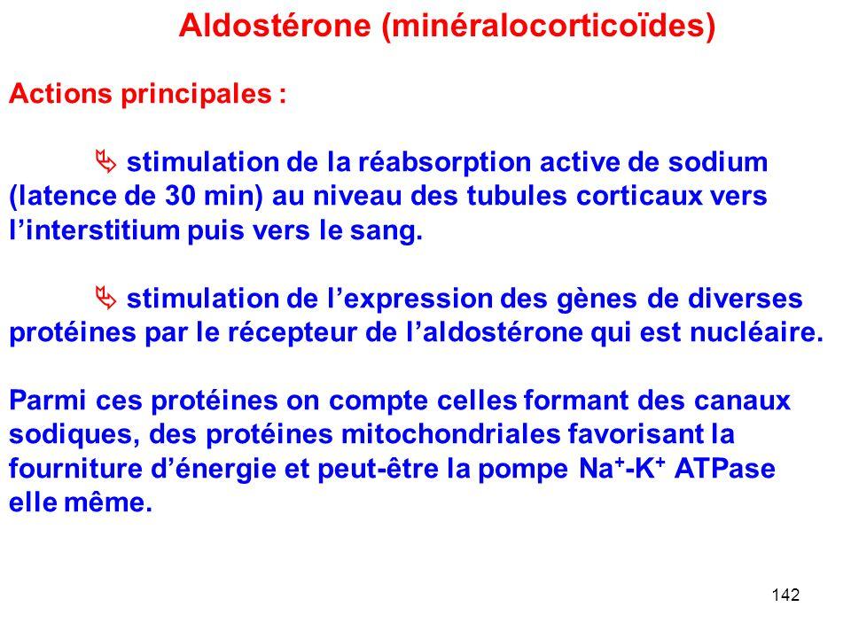 142 Aldostérone (minéralocorticoïdes) Actions principales :  stimulation de la réabsorption active de sodium (latence de 30 min) au niveau des tubules corticaux vers l'interstitium puis vers le sang.