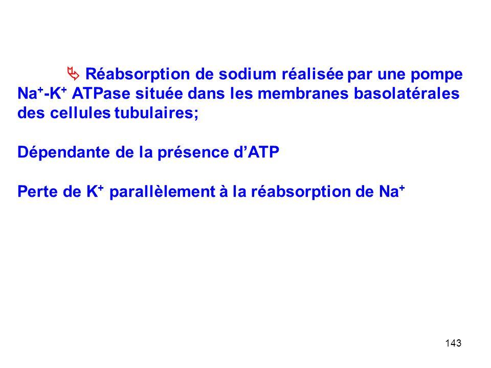 143  Réabsorption de sodium réalisée par une pompe Na + -K + ATPase située dans les membranes basolatérales des cellules tubulaires; Dépendante de la présence d'ATP Perte de K + parallèlement à la réabsorption de Na +