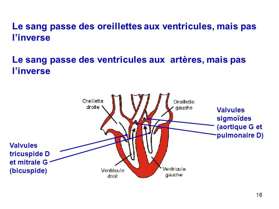 16 Le sang passe des oreillettes aux ventricules, mais pas l'inverse Le sang passe des ventricules aux artères, mais pas l'inverse Valvules sigmoïdes (aortique G et pulmonaire D) Valvules tricuspide D et mitrale G (bicuspide)