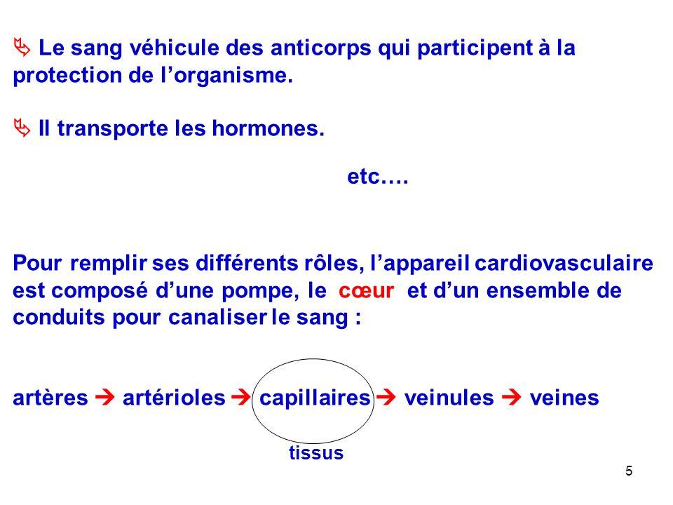 5  Le sang véhicule des anticorps qui participent à la protection de l'organisme.