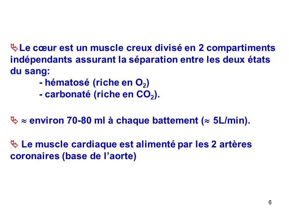6  Le cœur est un muscle creux divisé en 2 compartiments indépendants assurant la séparation entre les deux états du sang: - hématosé (riche en O 2 ) - carbonaté (riche en CO 2 ).