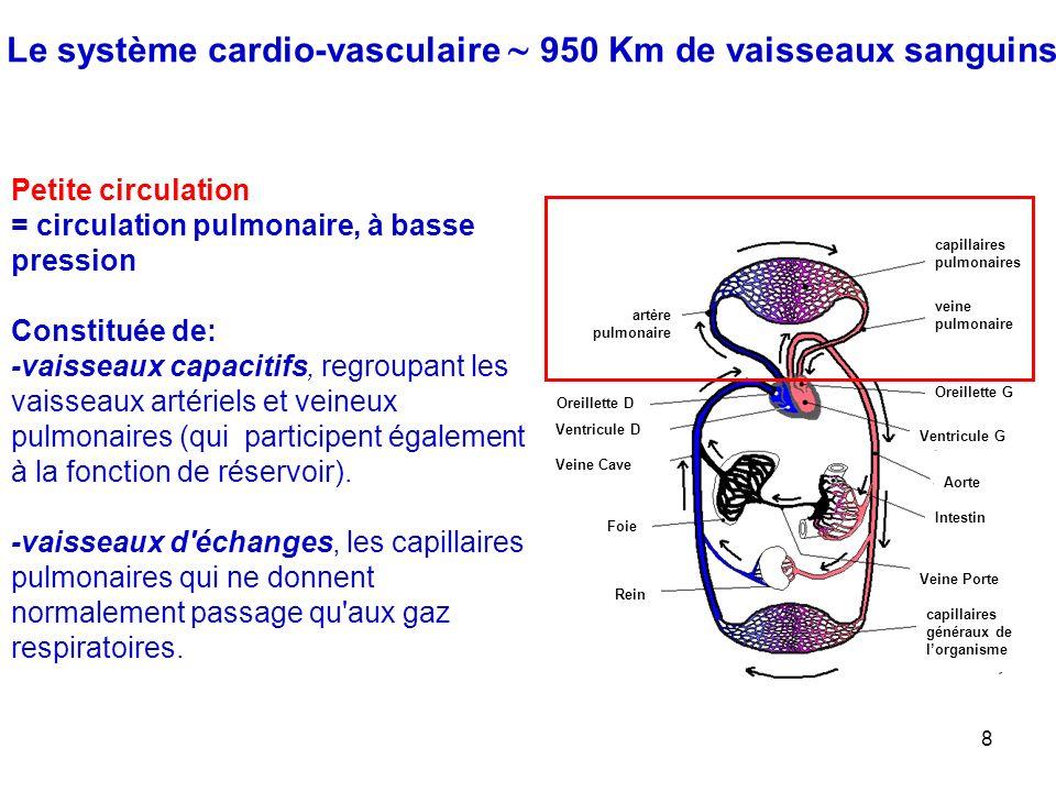 8 Le système cardio-vasculaire  950 Km de vaisseaux sanguins capillaires pulmonaires veine pulmonaire Oreillette G Ventricule G Aorte artère pulmonaire Oreillette D Ventricule D Veine Cave Veine Porte capillaires généraux de l'organisme Intestin Foie Rein Petite circulation = circulation pulmonaire, à basse pression Constituée de: -vaisseaux capacitifs, regroupant les vaisseaux artériels et veineux pulmonaires (qui participent également à la fonction de réservoir).