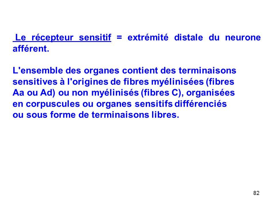 82 Le récepteur sensitif = extrémité distale du neurone afférent.