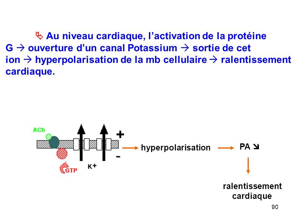 90 + - hyperpolarisation PA  ralentissement cardiaque  Au niveau cardiaque, l'activation de la protéine G  ouverture d'un canal Potassium  sortie de cet ion  hyperpolarisation de la mb cellulaire  ralentissement cardiaque.