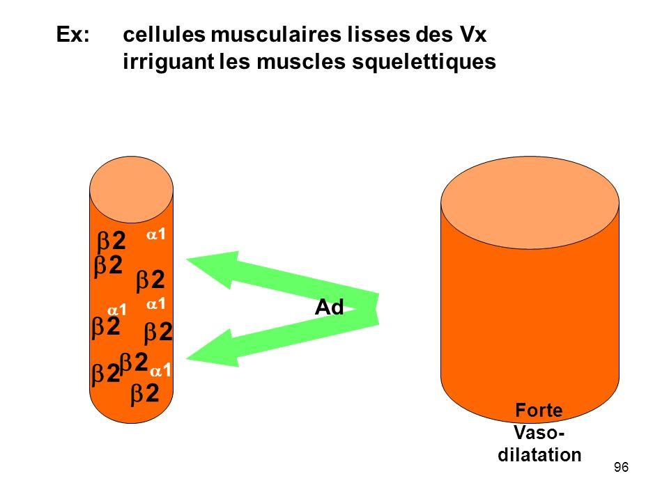 96 Ex: cellules musculaires lisses des Vx irriguant les muscles squelettiques 11 22 norAd Vaso- constriction Ad Forte Vaso- dilatation 11 11 11 22 22 22 22 22 22 22