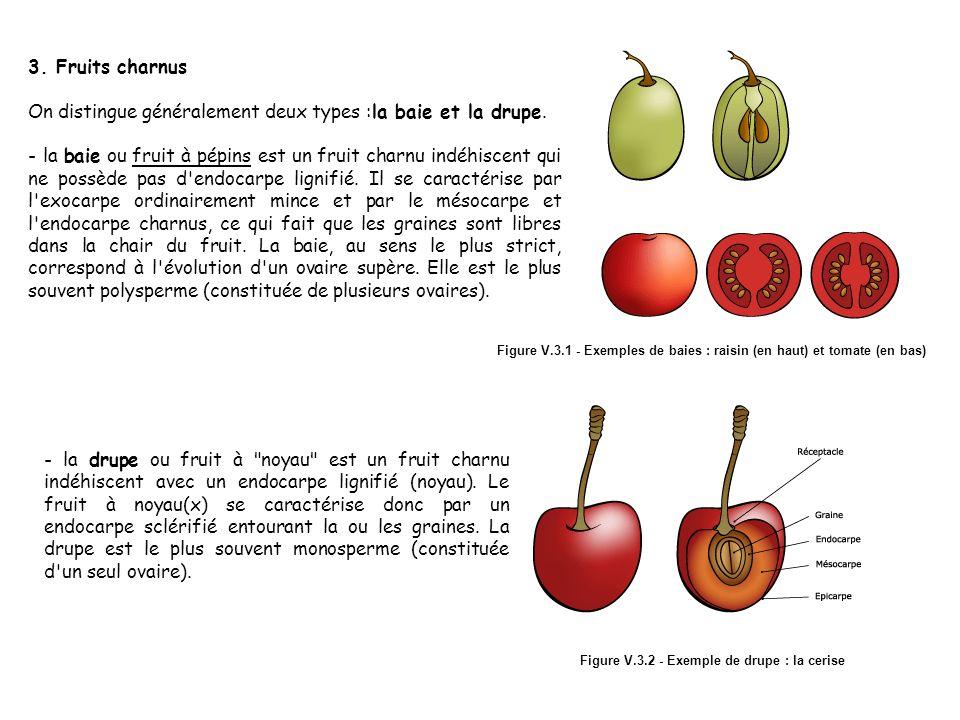 Formation du fruit: Le fruit est formé après la fécondation. Les ...