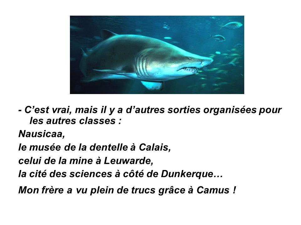 - C'est vrai, mais il y a d'autres sorties organisées pour les autres classes : Nausicaa, le musée de la dentelle à Calais, celui de la mine à Leuwarde, la cité des sciences à côté de Dunkerque… Mon frère a vu plein de trucs grâce à Camus !