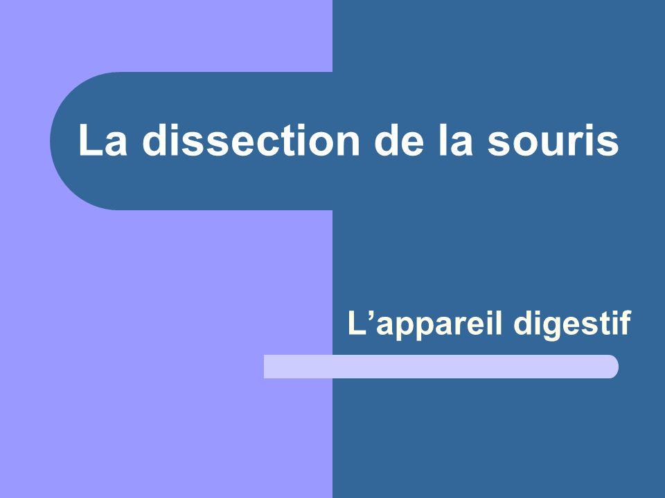 La dissection de la souris L'appareil digestif