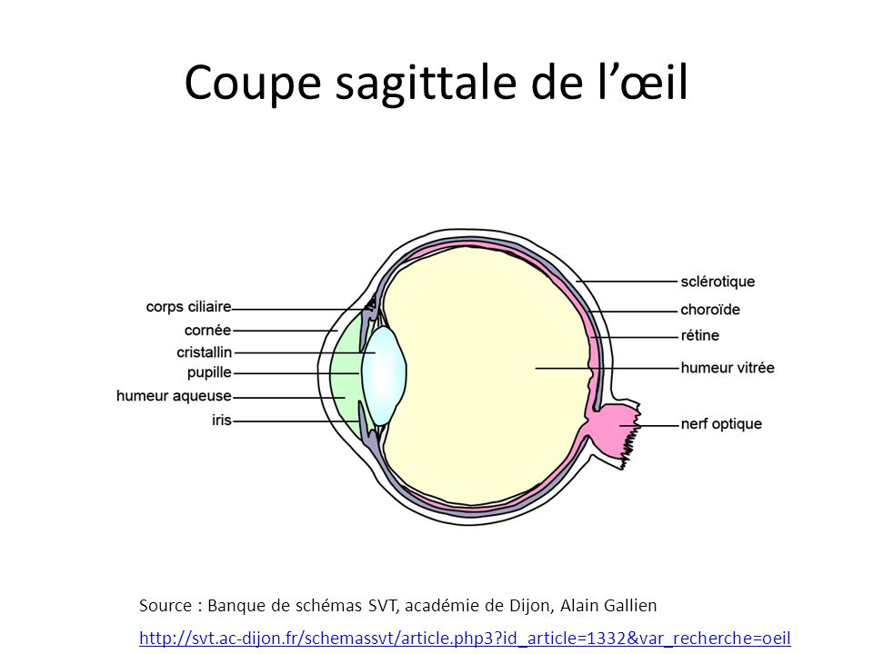 Extrêmement La vision : comparaison de l'œil et d'un appareil photo. - ppt  II25
