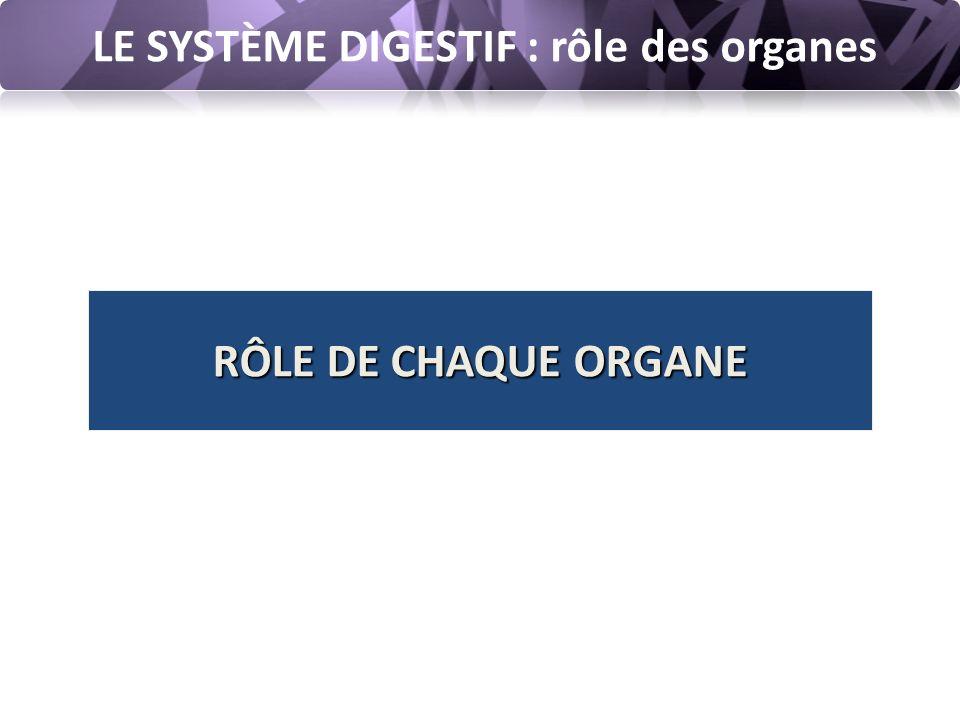 LE SYSTÈME DIGESTIF : rôle des organes RÔLE DE CHAQUE ORGANE