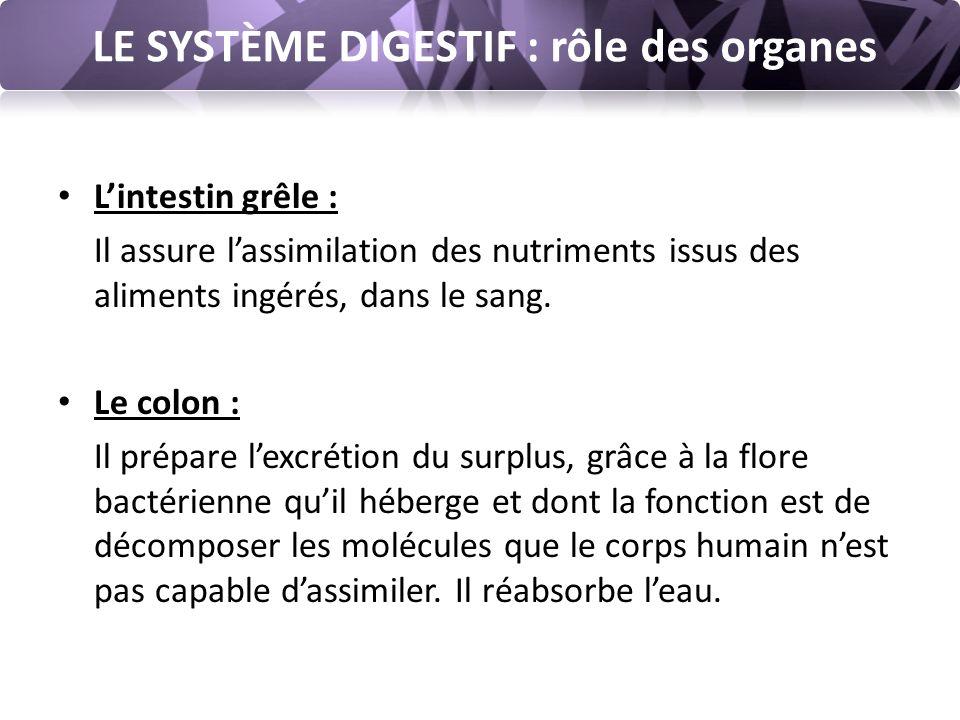 LE SYSTÈME DIGESTIF : rôle des organes L'intestin grêle : Il assure l'assimilation des nutriments issus des aliments ingérés, dans le sang.