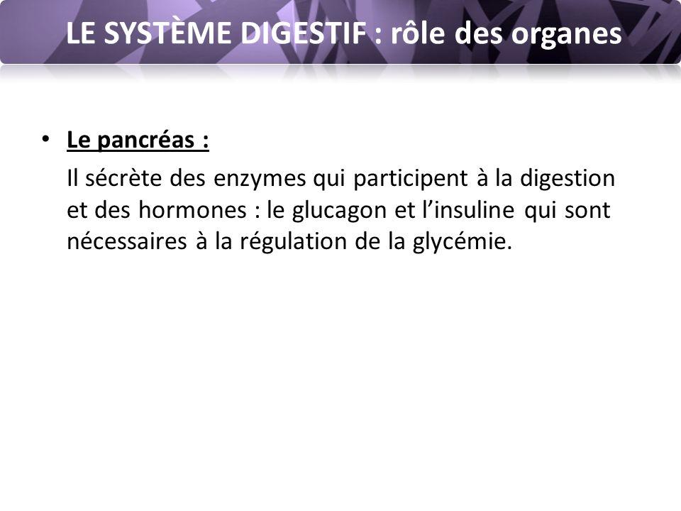 LE SYSTÈME DIGESTIF : rôle des organes Le pancréas : Il sécrète des enzymes qui participent à la digestion et des hormones : le glucagon et l'insuline qui sont nécessaires à la régulation de la glycémie.