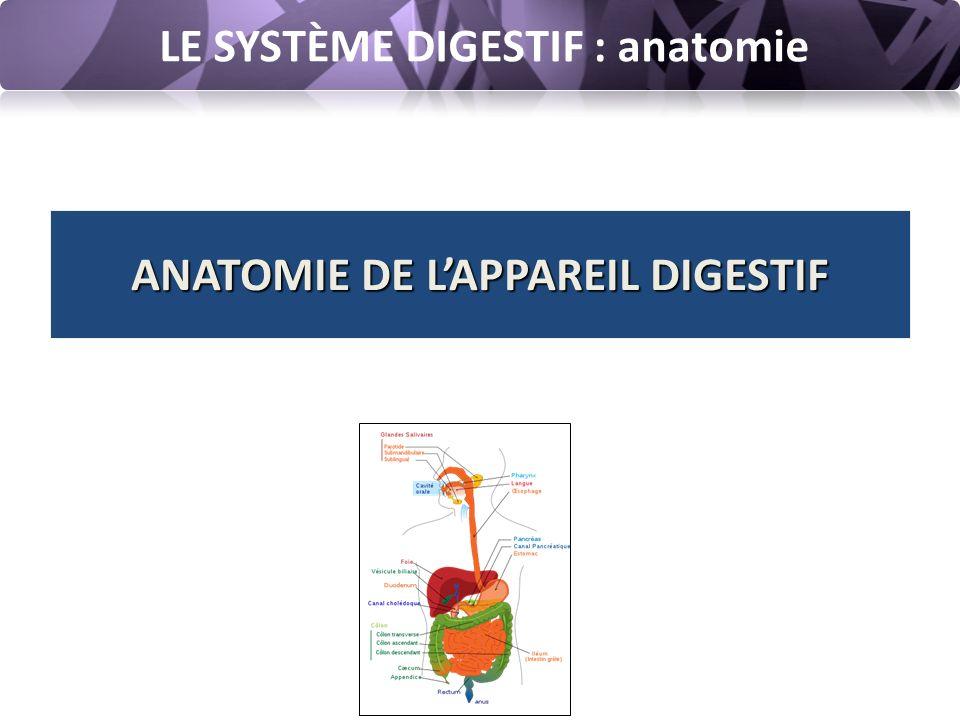 LE SYSTÈME DIGESTIF : anatomie Système digestif ou système gastro-intestinal ou appareil digestif = ensemble des organes qui participent à la digestion L'appareil digestif est constitué d'un tube digestif continu, ouvert, allant de la bouche à l'anus